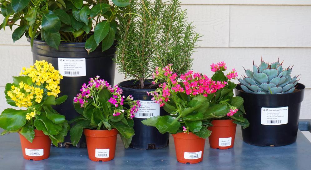 gardening labels 1